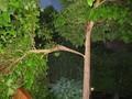 Sturmsicher? Die Baumkontrolle